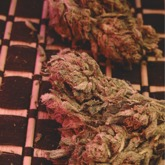 Big Bag Feminized