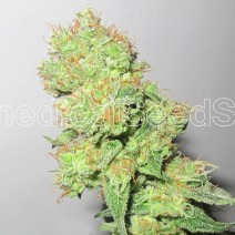 Y Griega CBD Feminised Seeds